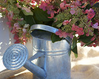 Hydrangeas in Watering Can Royalty Free Stock Images