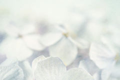 Hydrangeas in winter style on mulberry paper texture Stock Photo