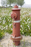 hydrant images libres de droits