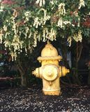 Hydrant beneath the flowers. Royalty Free Stock Image