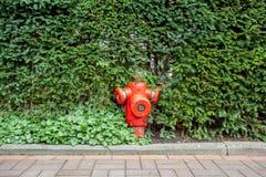 Hydrant in de struiken stock foto