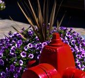 Hydrant w kwiatach Fotografia Stock