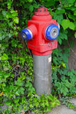 Hydrant. Water hydrant overgrown with weeds Royalty Free Stock Photos