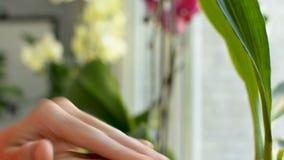 Hydratant des bras et des doigts utilisant la lotion exposent au soleil le baume crème de protection du verre banque de vidéos