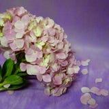 hydrengea blüht Blume lizenzfreie stockbilder