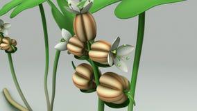Hydrocotyle illustrazione vettoriale