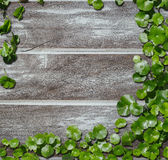 Hydrocotyle on the old wood background Royalty Free Stock Photos