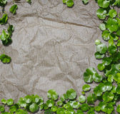 Hydrocotyle on the recycled paper background Stock Images