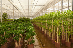 Hydroculture plant nursery various plants Stock Images