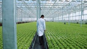 Hydrocultuurmethode om salade in serre te kweken Twee laboratoriummedewerkers onderzoeken het verdant installatie groeien landbou stock video