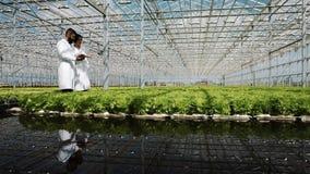 Hydrocultuurmethode om salade in serre te kweken Twee laboratoriummedewerkers onderzoeken het verdant installatie groeien landbou stock footage