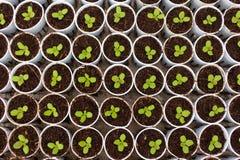 Hydrokulturgrönsak Royaltyfri Foto