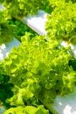 Hydrokulturlantgård Arkivfoto