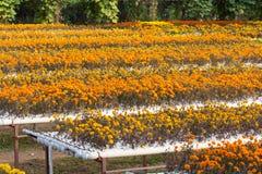 Hydrokulturlantgården är en metod av att växa växter genom att använda mineral Arkivbilder