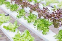Hydrokultursystemväxthus och organisk grönsaksallad i lantgården för hälso-, mat- och jordbrukbegreppsdesign arkivfoto