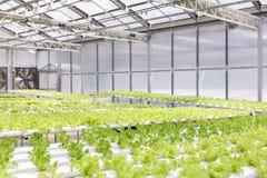 Hydrokultursystemväxthuset och organisk grönsaksallad i hydrokultur brukar arkivbilder