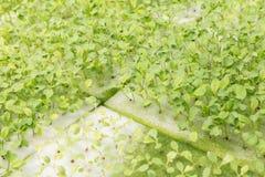 Hydrokultursystemväxthuset och organisk grönsaksallad i hydrokultur brukar för hälso-, mat- och jordbrukbegreppsdesign arkivbild