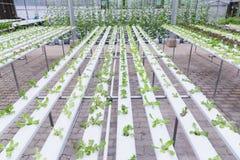 Hydrokulturväxthus Organisk grön grönsaksallad i hydrokulturlantgården för hälso-, mat- och jordbrukbegreppsdesign arkivfoto