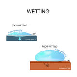 Hydrophilic and hydrophobic surface. Wetting and Surface tension for water. hydrophilic and hydrophobic surface. Poor wetting and good wetting of the surface Stock Images