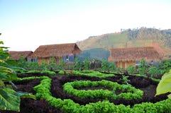 Hydrophonic farm. Hydrophonic Plantation at Montawan Chiangmai Royalty Free Stock Photography