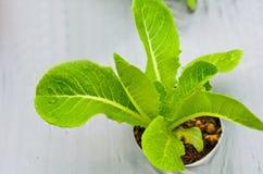 Hydrophonic Plantage Lizenzfreies Stockfoto