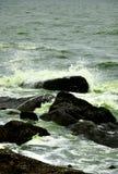 Hydroplanktonu kwiatu zieleni natury woda Obraz Royalty Free