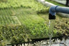 Hydroponic автоматизация для огорода дуба зеленого цвета овоща, техник воды и удобрения системы фермы eco органический современны стоковая фотография