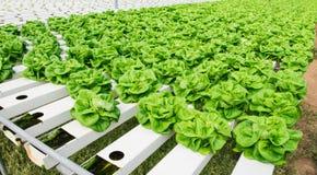 Hydroponic засаживать овоща Стоковое фото RF
