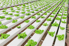 Hydroponic засаживать овоща Стоковые Изображения