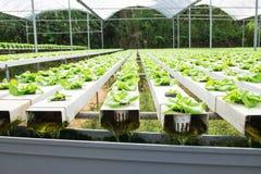 Hydroponic засаживать овоща Стоковые Изображения RF