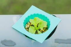 Hydroponic овощи стоковое фото