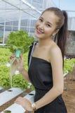 Hydroponic органический овощ Стоковые Фотографии RF