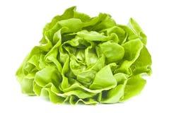 hydroponic салат Стоковые Изображения RF