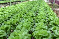 hydroponic foto de stock royalty free