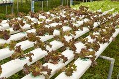 hydroponic imagem de stock