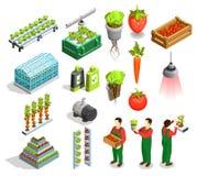 Hydroponic And Aeroponic Isometric Icons. Set of fresh fruits and vegetables harvest orangery fertilizer symbols isolated vector illustration Stock Image