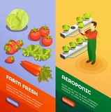 Hydroponic And Aeroponic Vertical Banners. Hydroponic and aeroponic vertical  banners with farmer growing fresh fresh fruits and vegetables isometric vector Stock Photography