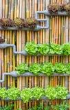 Hydroponic arbeta i trädgården för lodlinje Arkivbild