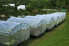 HYDROPONIC FARM Stock Photography