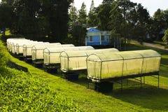 HYDROPONIC FARM Stock Image