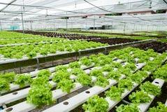 Hydroponic farm Royalty Free Stock Photo
