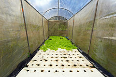 Hydroponic Farm. Growing vegetables using no soil or soilless culture Stock Photography