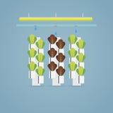 Hydroponic farm illustration Stock Images