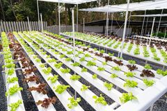 Hydroponic farm Stock Photos