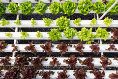 Hydroponic farm Royalty Free Stock Image