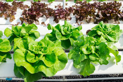 Hydroponic farm Royalty Free Stock Photos