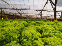 Hydroponic farm Royalty Free Stock Images