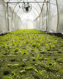 Hydroponic farmland Stock Photos