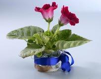 Hydroponic flower Stock Photo