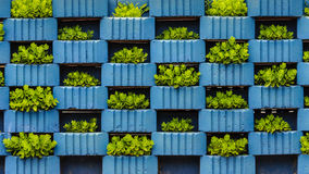 Hydroponic garden vegetables in small containers Royalty Free Stock Photos